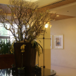 G1-Tree-in-tall-dark-pot-surronded-by-yellow-orchids