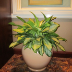G25-Orchid-arranged-in-yellow-pot