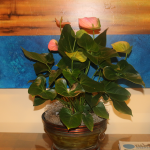 G14-Pink-Flowers-in-bronze-vase-in-front-of-picture