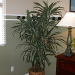 G15-Dracena-next-to-lamp-on-table