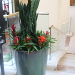 G16-Snake-and-bromeliads-in-grey-container-near-staircase