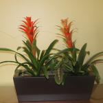 G17-Bromeliads-in-brown-rectangle-container