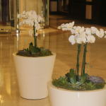 G2-Two-tan-containers-with-orchids-and-succulents