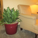 G22-Large-Ag-in-burgundy-container-next-to-chair