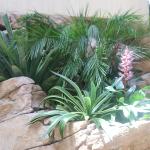 G24-plants-in-rock-waterfall-area