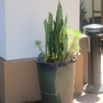 G26-Snake-and-succulents-in-tall-brown-container