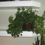 G31-Ivy-in-brown-basket-on-mantle