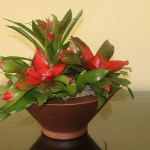 G33-Bromeliad-arranged-in-brown-container