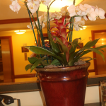 G34-Orchid-and-Bromeliad-arranged-in-brown-container