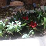 G35-Succulents-around-pond